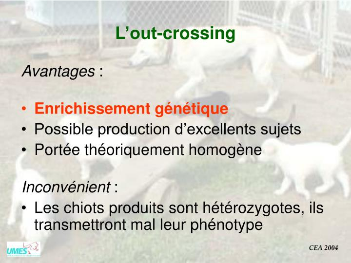 L'out-crossing