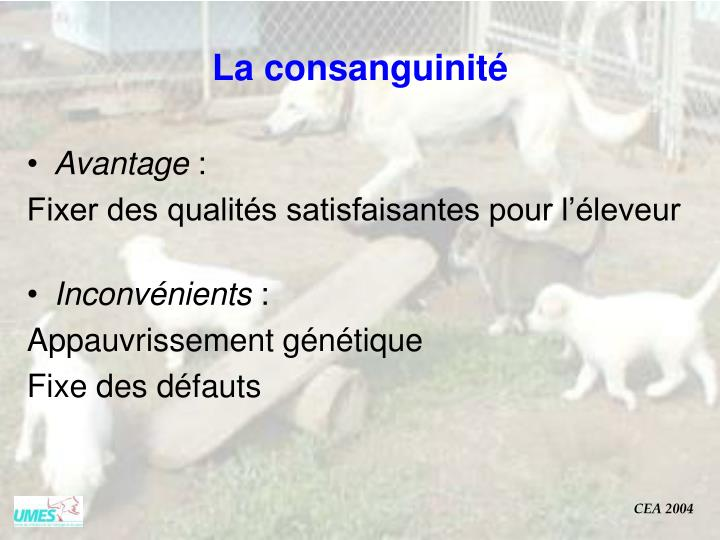 La consanguinité