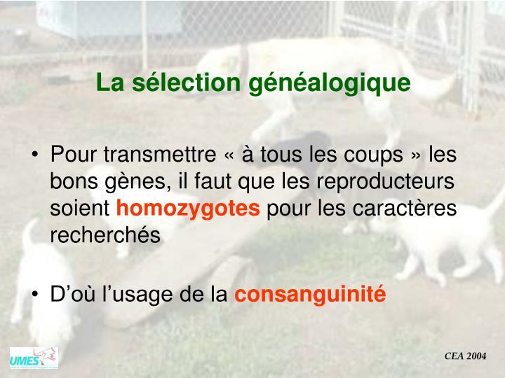 La sélection généalogique