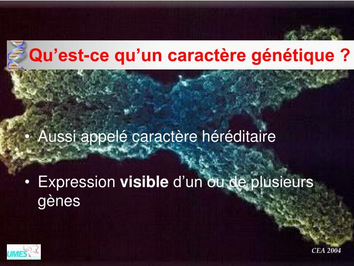 Qu'est-ce qu'un caractère génétique ?