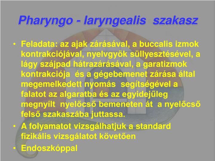 Pharyngo - laryngealis  szakasz