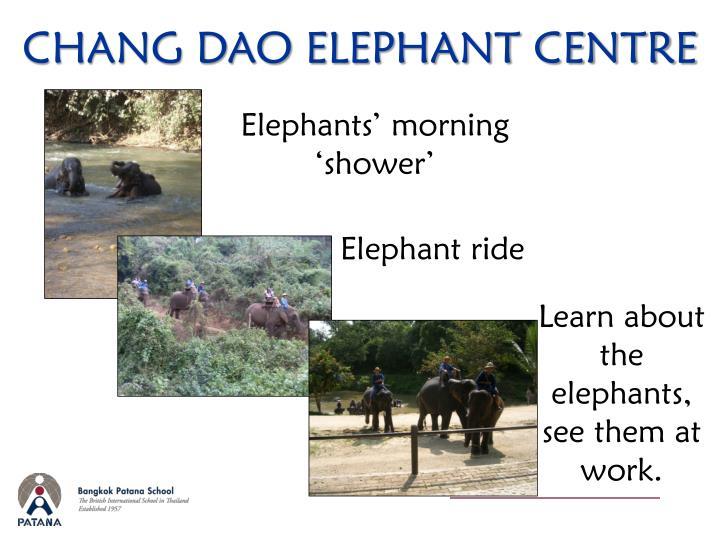 CHANG DAO ELEPHANT CENTRE