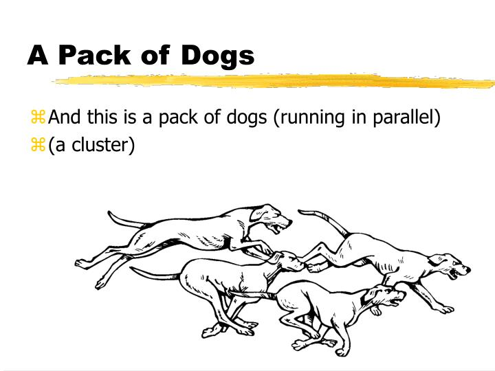 A Pack of Dogs