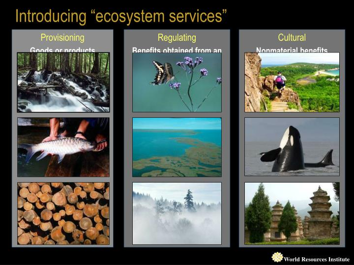 "Introducing ""ecosystem services"""