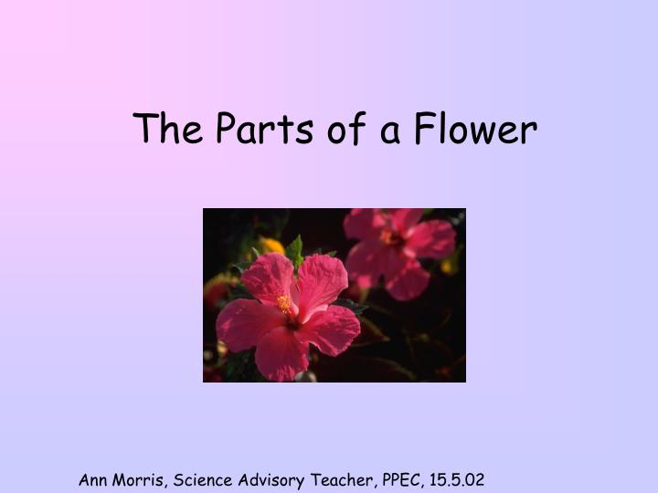 the parts of a flower n.