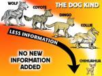 dog kind no new info