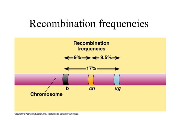 Recombination frequencies