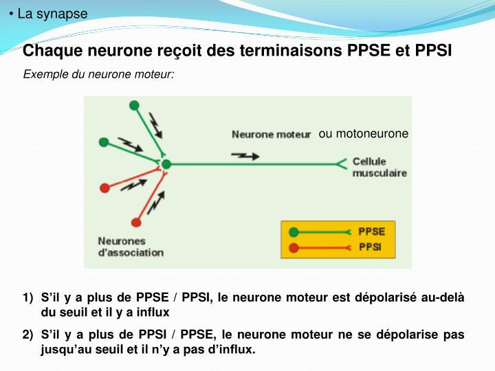 ou motoneurone