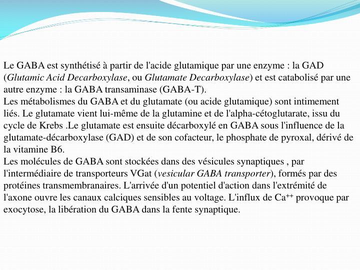 Le GABA est synthétisé à partir de l'acide glutamique par une enzyme : la GAD (