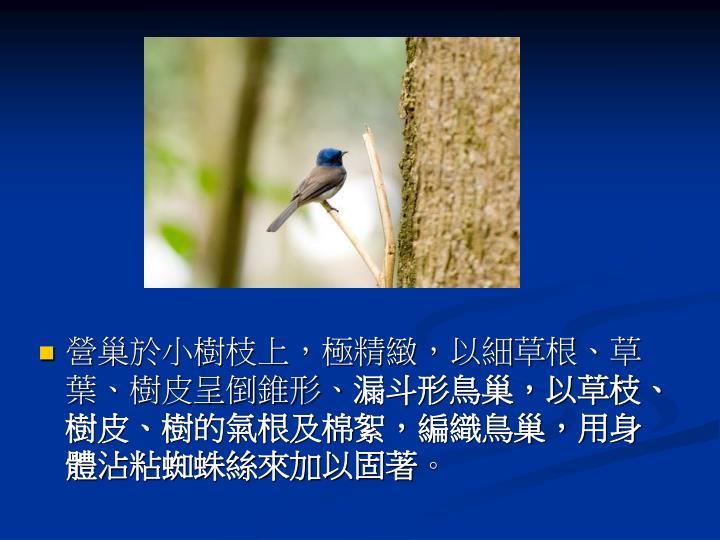 營巢於小樹枝上,極精緻,以細草根、草葉、樹皮呈倒錐形、