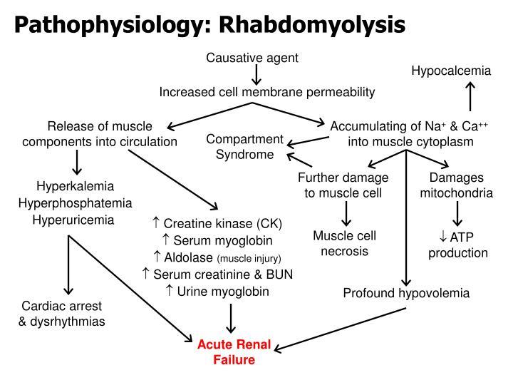 Pathophysiology: Rhabdomyolysis