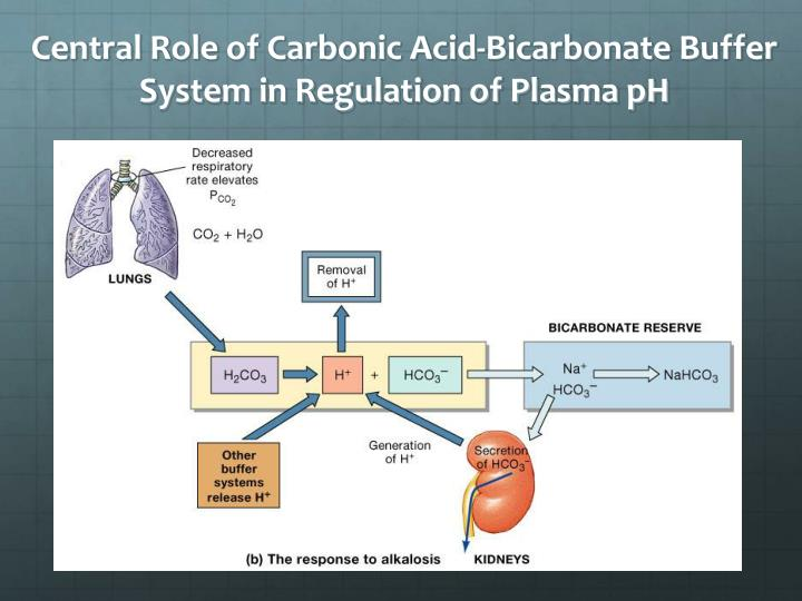 role of kidney in regulation of 24 renal regulation of acid-base balance updated 12april2016 241 role of the kidneys the kidney is responsible for 2 major activities:.