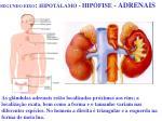 segundo eixo hipot lamo hip fise adrenais