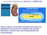 segundo eixo hipot lamo hip fise adrenais1