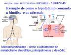 segundo eixo hipot lamo hip fise adrenais8