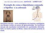 segundo eixo hipot lamo hip fise adrenais9