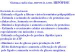sistema end crino hipot lamo hip fise3