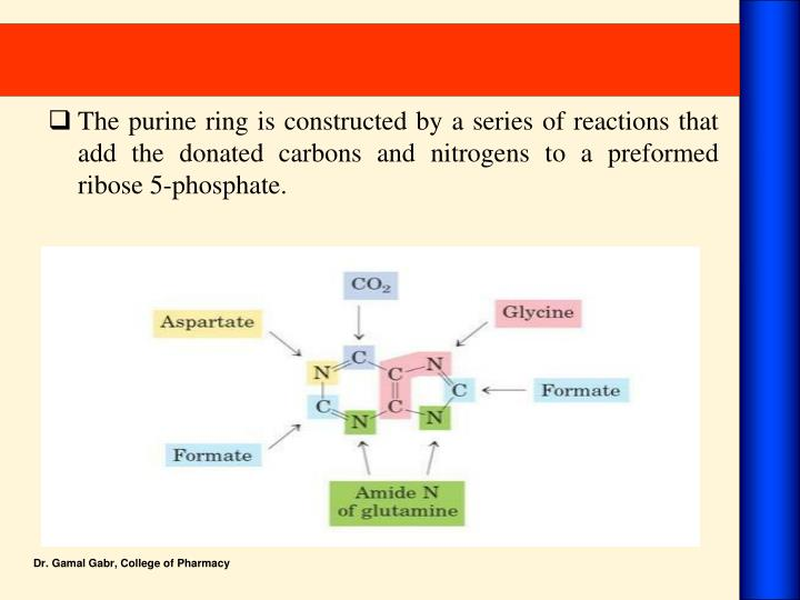 The purine ring is constructed by a series of reactions that add the donated carbons and nitrogens to a preformed ribose 5-phosphate.