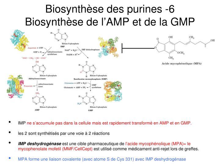 Biosynthèse des purines -6