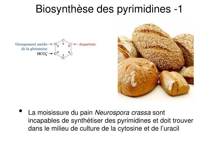 Biosynthèse des pyrimidines -1