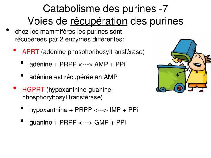 Catabolisme des purines -7