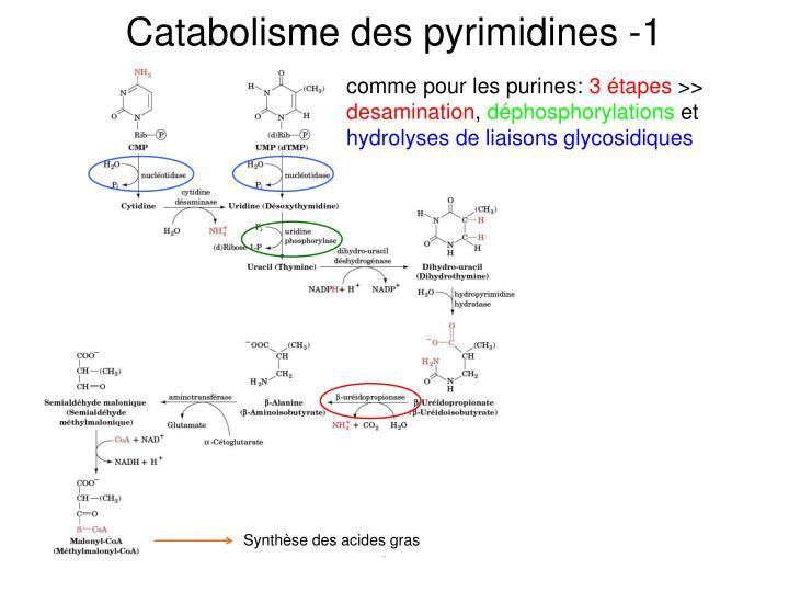 Catabolisme des pyrimidines -1