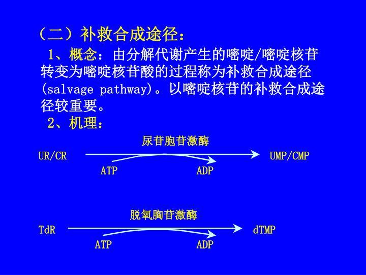尿苷胞苷激酶