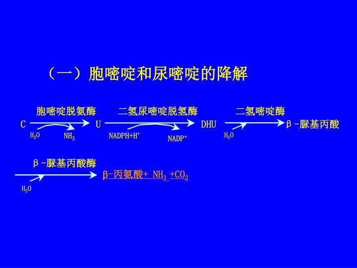 (一)胞嘧啶和尿嘧啶的降解