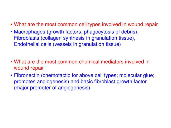 What are the most common cell types involved in wound repair