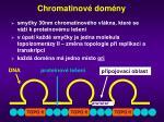 chromatinov dom ny