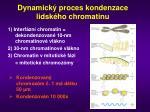 dynamick proces kondenzace lidsk ho chromatinu