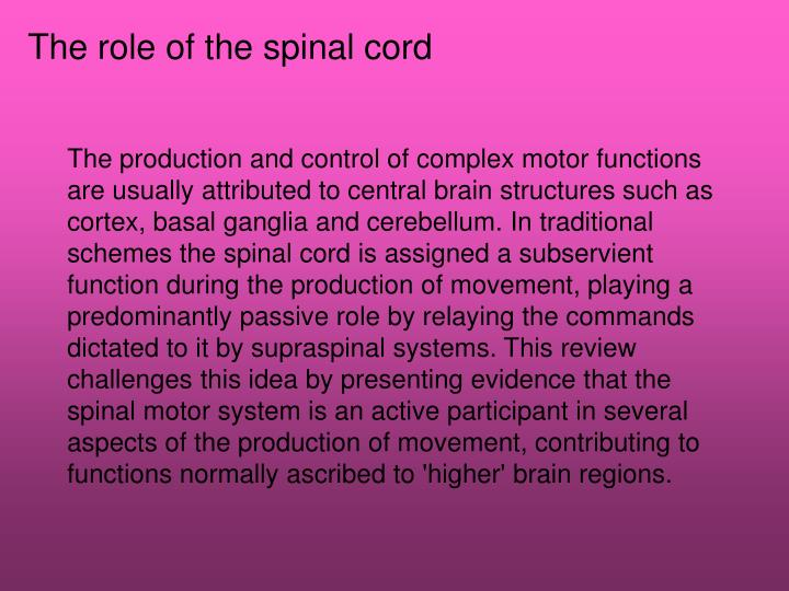 The role of the spinal cord