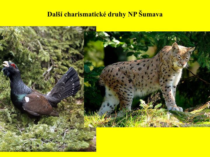Další charismatické druhy NP Šumava