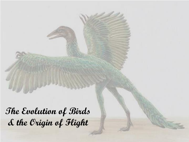 Ppt phylum aves powerpoint presentation id:35724.
