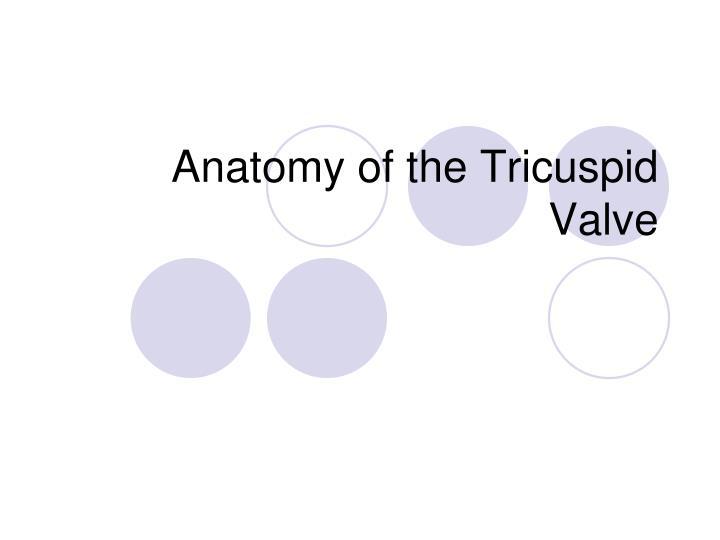 Anatomy of the Tricuspid Valve