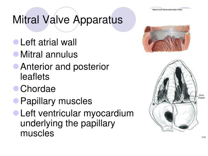 Mitral Valve Apparatus