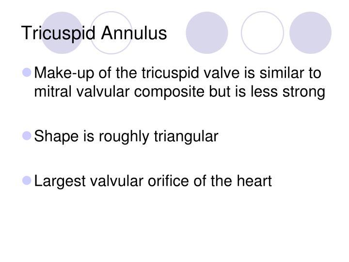 Tricuspid Annulus