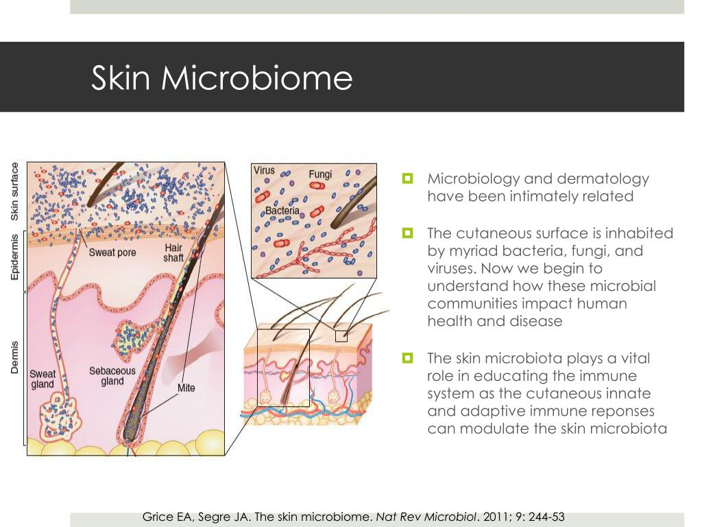PPT - The Skin Microbiome Yoon K. Cohen, D.O. Hot Spots in ...