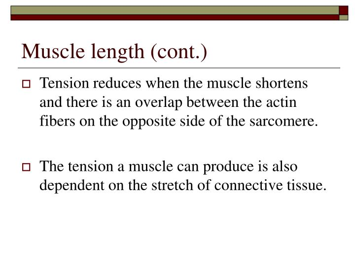 Muscle length (cont.)