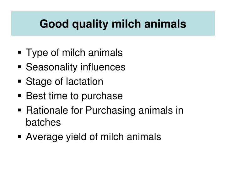 Good quality milch animals