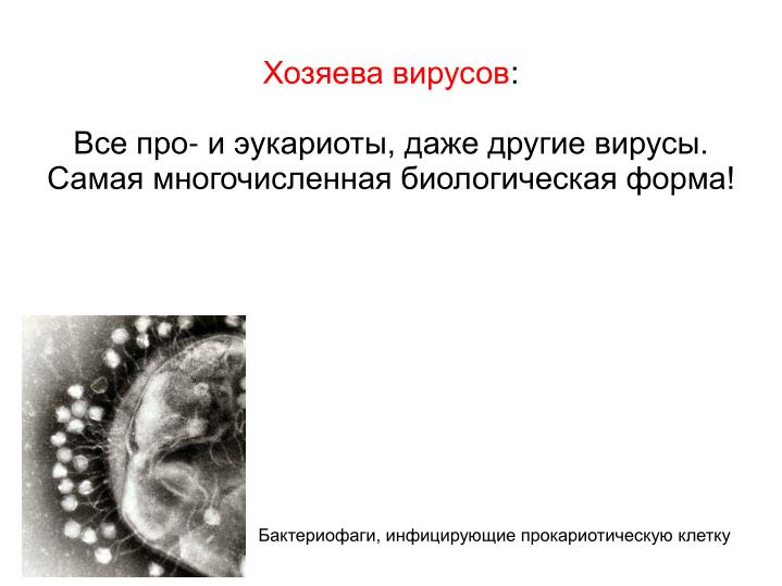 Хозяева вирусов