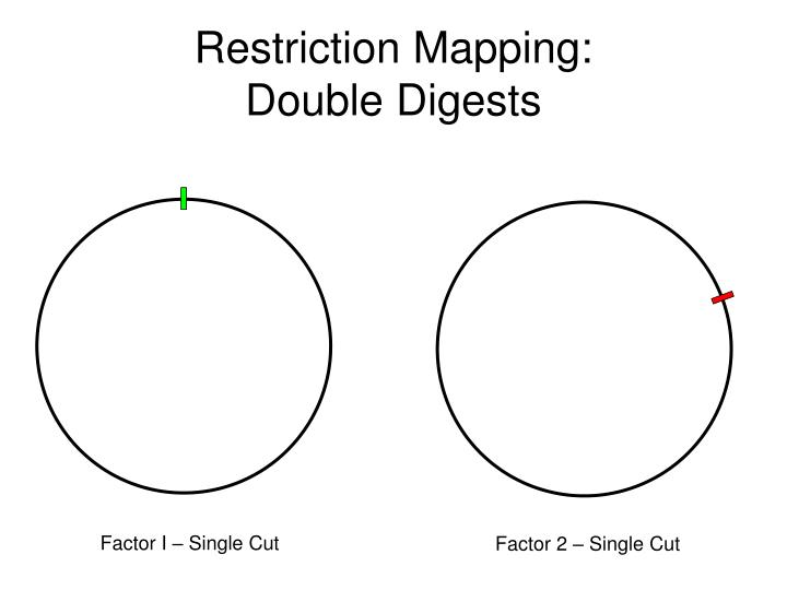 Restriction Mapping: