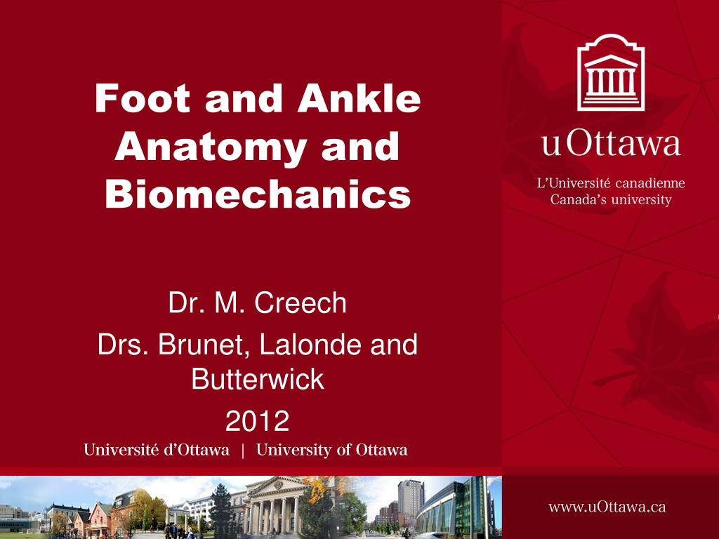 Ppt Foot And Ankle Anatomy And Biomechanics Powerpoint