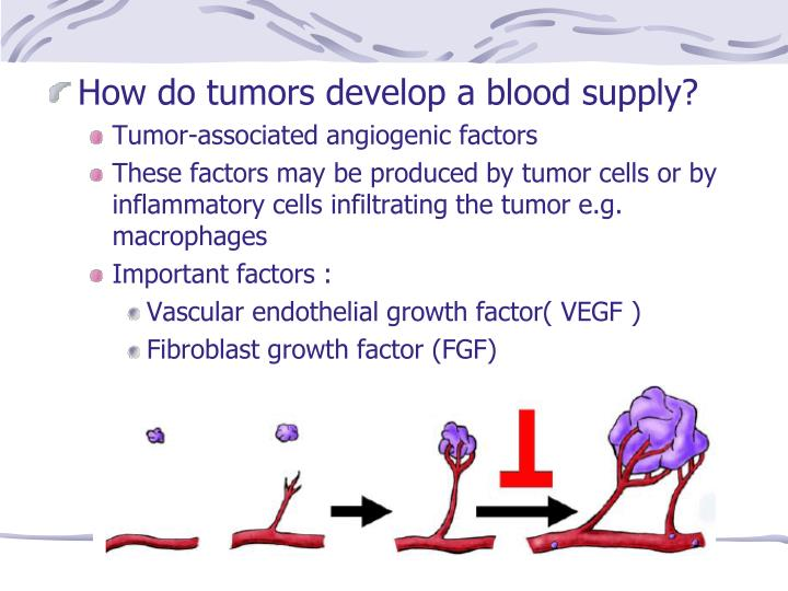 How do tumors develop a blood supply?