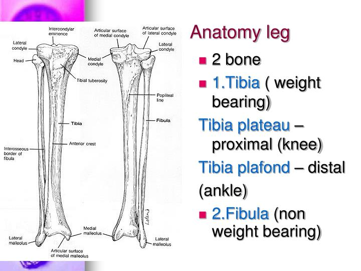 PPT - 7.Knee injury ( Diagnosis???) PowerPoint ...