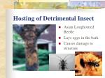 hosting of detrimental insect