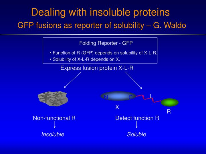 Folding Reporter - GFP