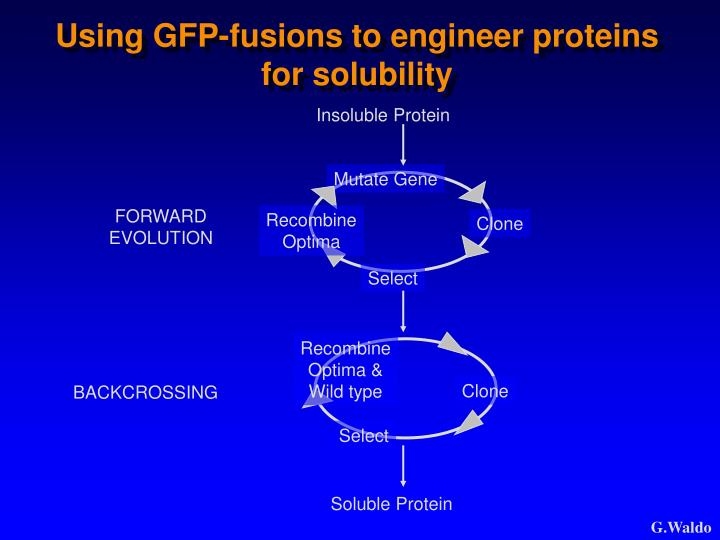 Insoluble Protein