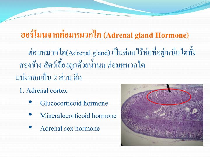 ฮอร์โมนจากต่อมหมวกไต