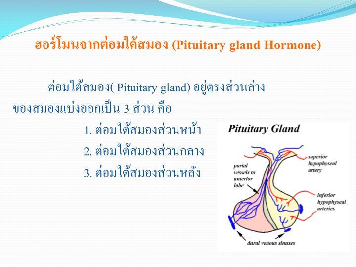ฮอร์โมนจากต่อมใต้สมอง (